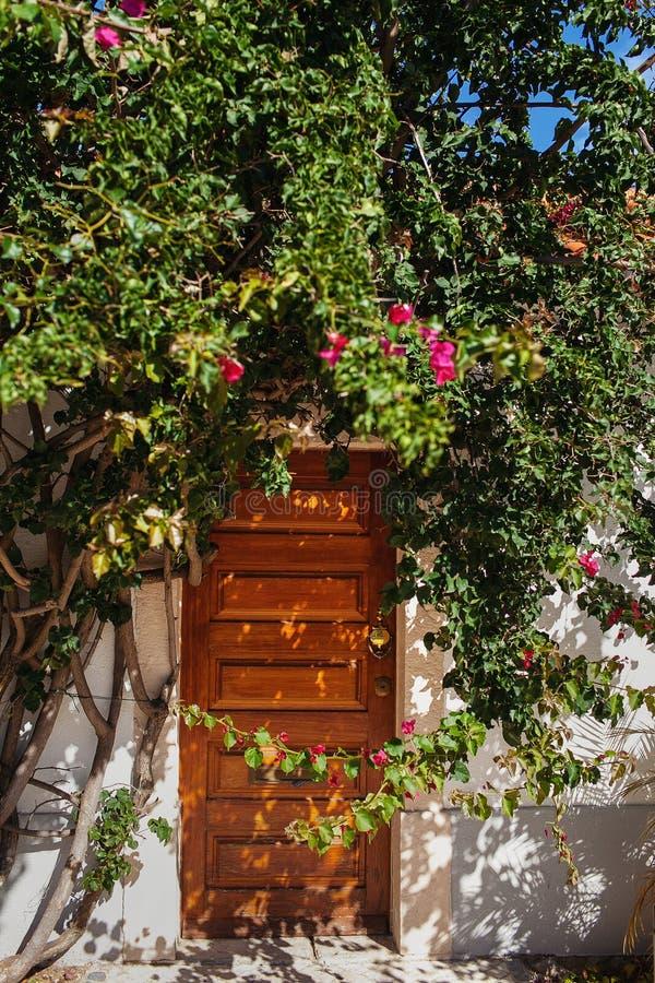 Puerta de madera ocultada detrás del verdor imagen de archivo