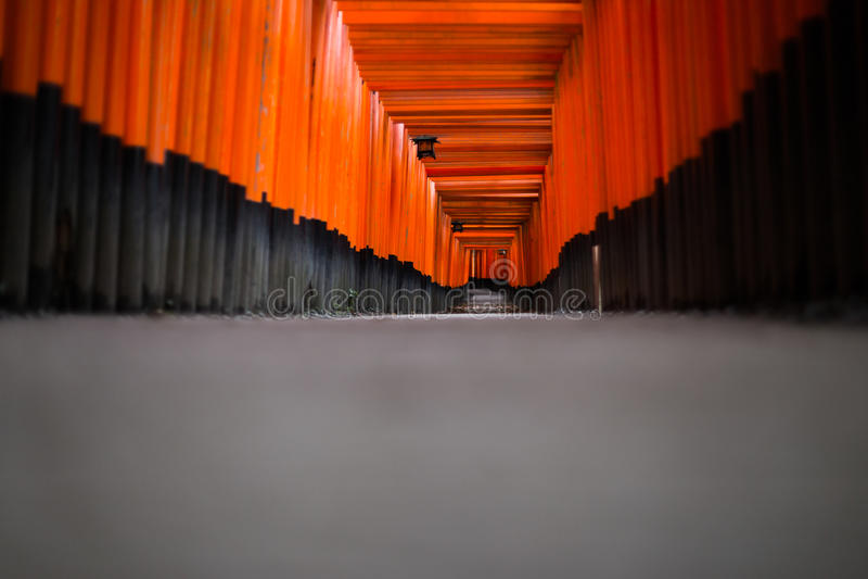Puerta de Torii en la capilla de Fushimi Inari, Kyoto, Japón - profundidad baja foto de archivo