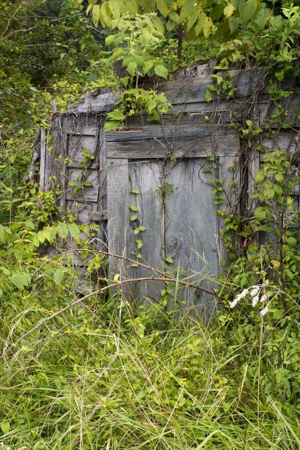 Puerta del sótano de raíz cubierta en vides imagen de archivo libre de regalías