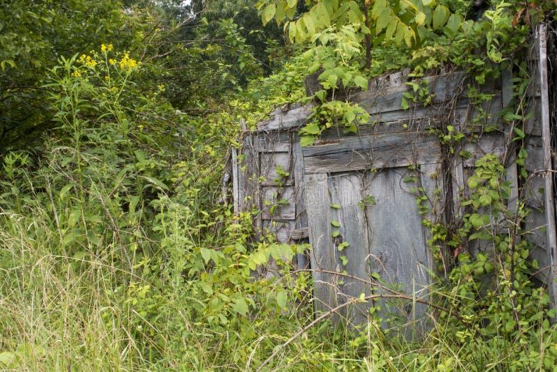 Puerta del sótano de raíz cubierta en vides fotos de archivo libres de regalías
