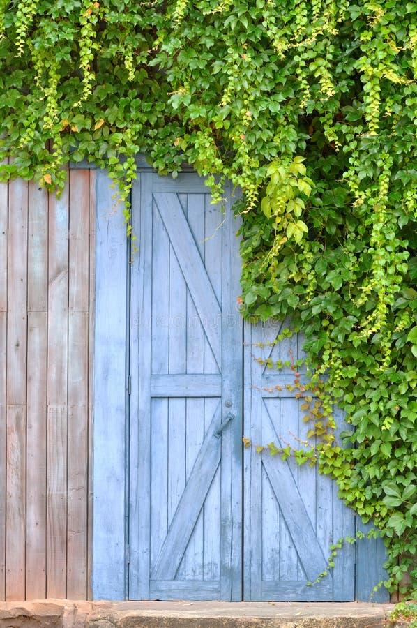Puerta en jardín y planta