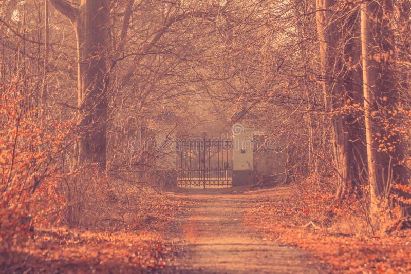 Puerta grande en un bosque brumoso fotos de archivo libres de regalías