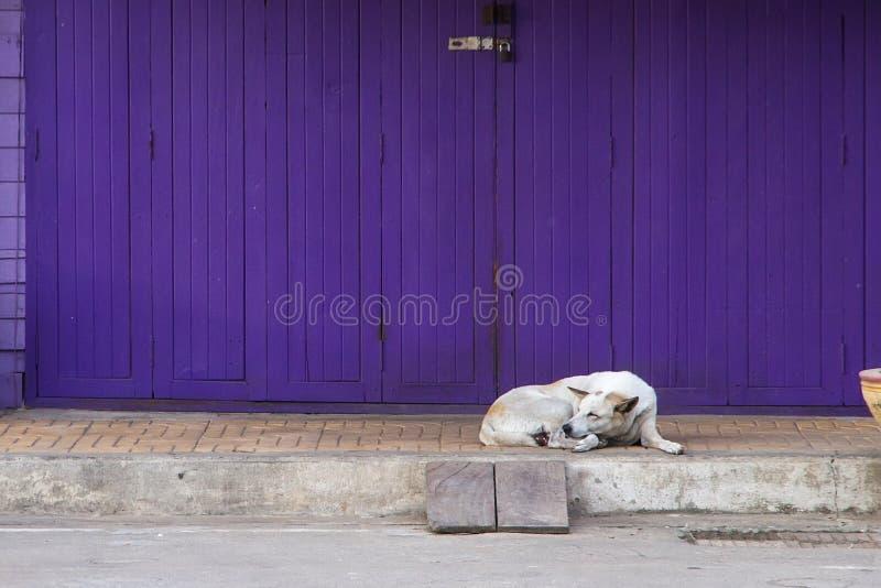 Puerta púrpura del plegamiento retro con el perro soñoliento en estilo del vintage fotografía de archivo