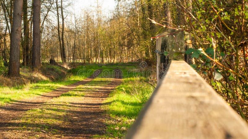 Puerta Windsor Great Park, fular del norte, Reino Unido Puerta en el bosque fotografía de archivo