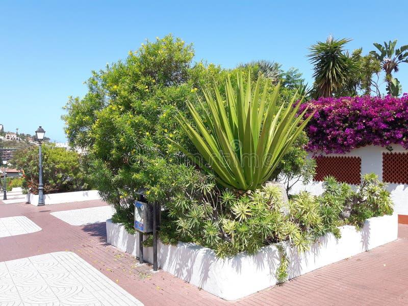 Puerto de la Cruz, Tenerife foto de archivo libre de regalías
