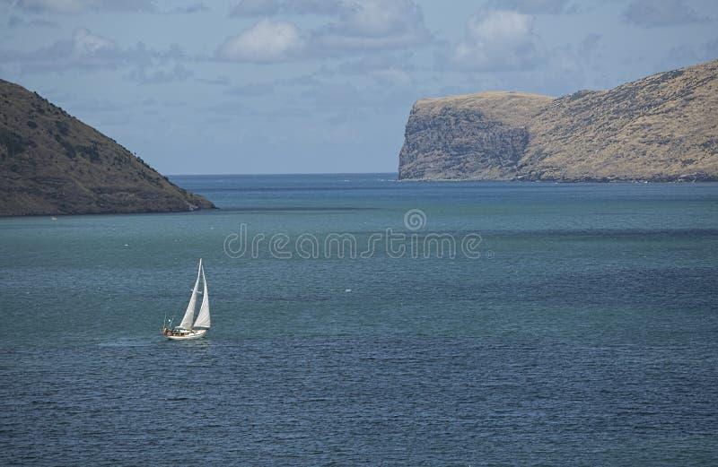 Puerto de Tauranga, isla septentrional de Nueva Zelanda fotografía de archivo libre de regalías
