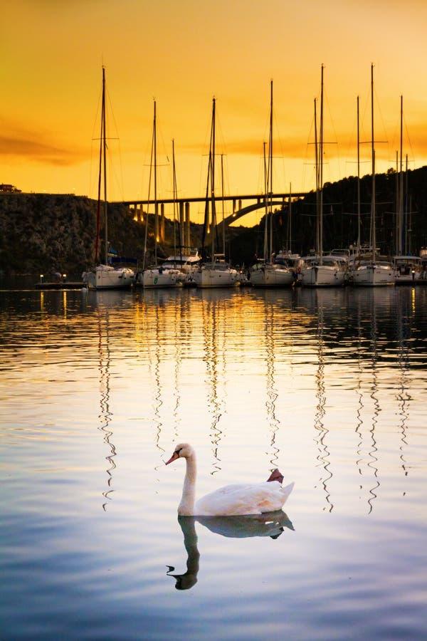 Puerto del cisne fotos de archivo