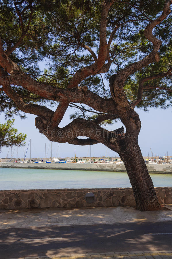 Puerto deportivo del barco, ruta biking y árbol grande imagen de archivo