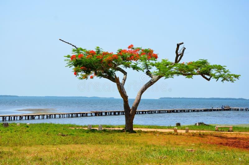 Puerto Esperanza стоковая фотография