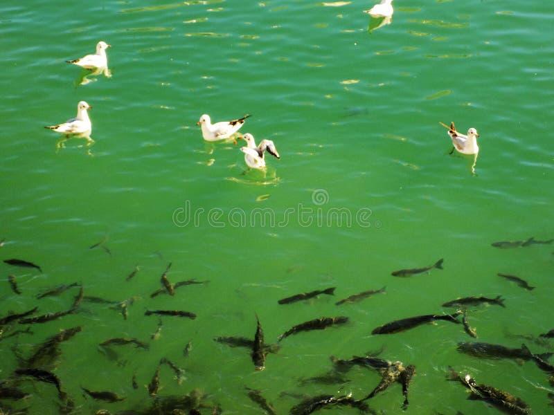 Download Puerto Hiszpania Europa obraz stock. Obraz złożonej z seagulls - 106920463