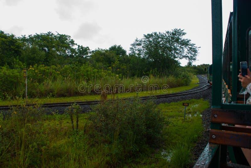 Puerto Iguazu, Аргентина Ландшафт Игуазу Фаллс стоковое фото