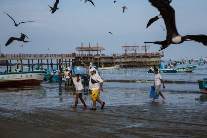 Puerto Lopez, эквадор/26-ое ноября 2012: Рой чайок вокруг шлюпки стоковое фото rf