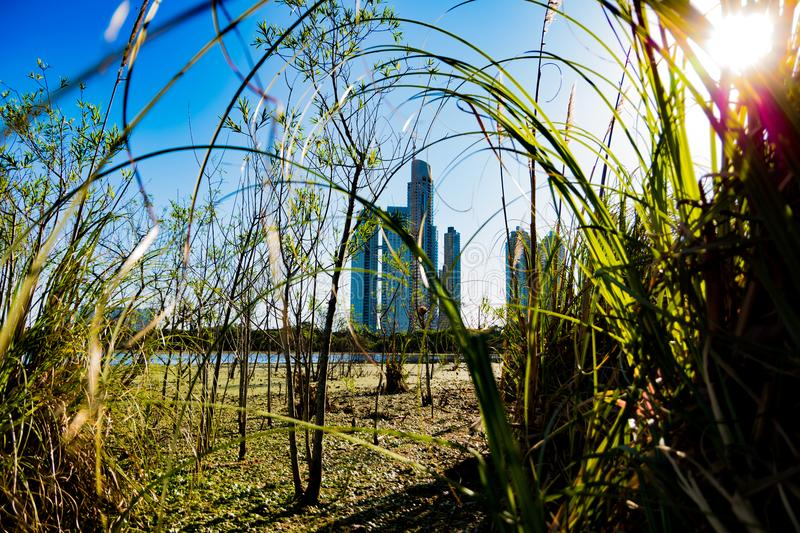 Puerto Madero buildings framed by nature, green trees and sunlight.  royalty free stock photo