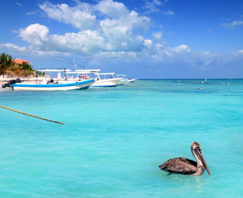 Puerto Morelos beach Mayan riviera Caribbean sea. Pelican bird stock photo