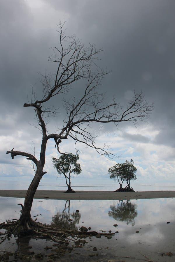 Puerto Princesa, Palawan,菲律宾 免版税库存照片