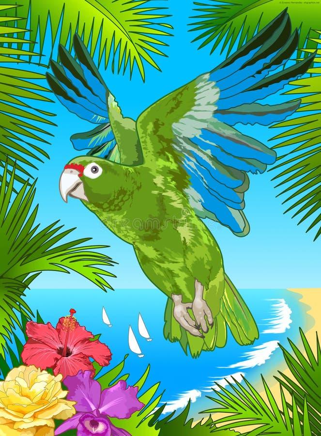 Puerto Rican Parrot vector illustration