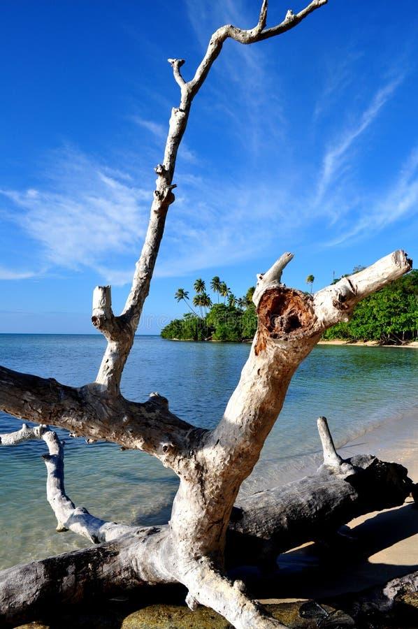 Puerto Rico Beach 1. Driftwood on the beach near Mayaguez Puerto Rico royalty free stock photos