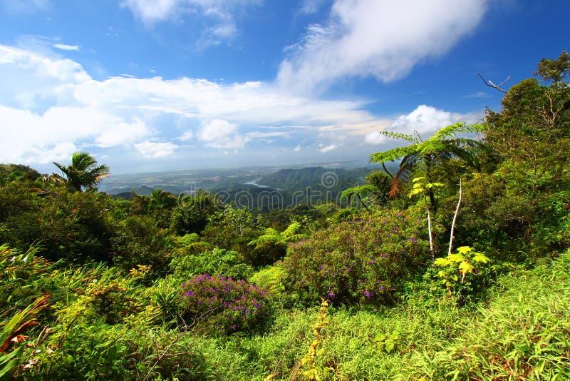 Puerto Rico Forest stock photos
