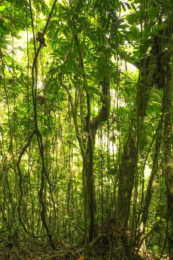 Puerto Rico Rainforest imágenes de archivo libres de regalías