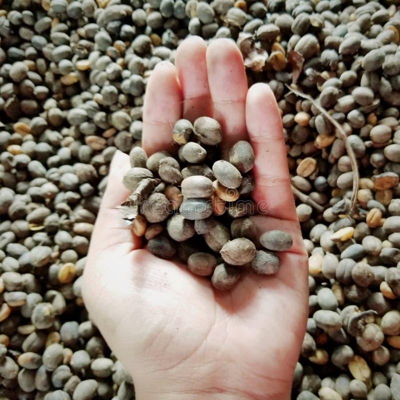 Puertorikanischer Kaffee lizenzfreies stockfoto