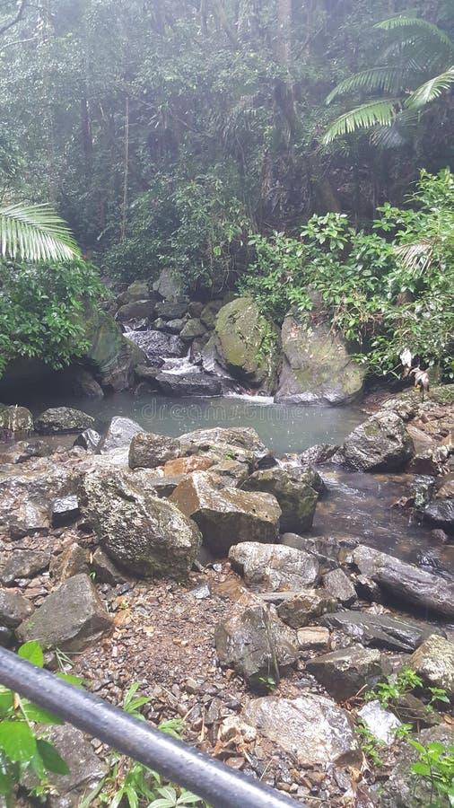 Puertorikanischer Regenwald lizenzfreies stockfoto