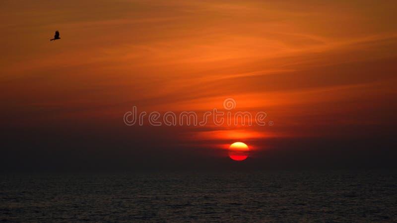Puesta de sol en la playa kozhikode calicut pájaro india bello color naranja sol nube fotografía de archivo libre de regalías