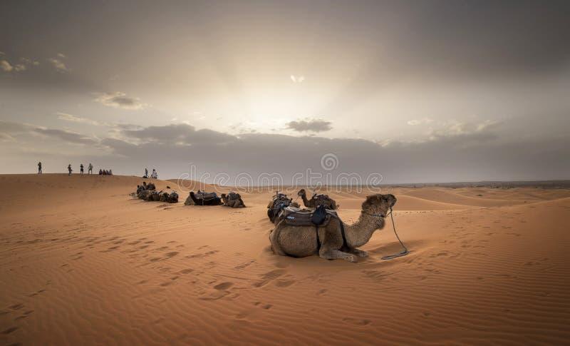 Puesta de sol mística con camellos en el desierto imagenes de archivo