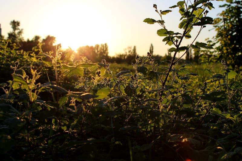 Puesta del sol 004 del árbol imagen de archivo libre de regalías