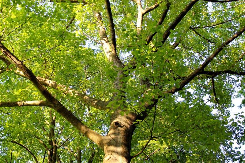 Puesta del sol 006 del árbol imagen de archivo