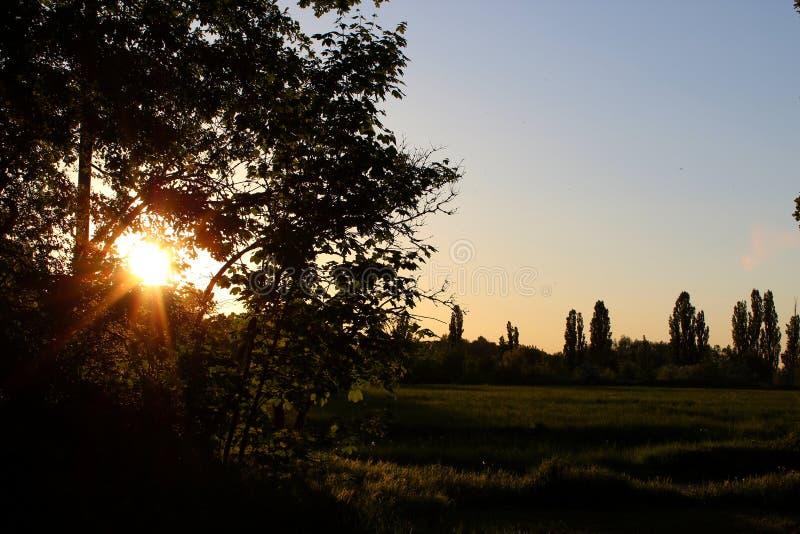 Puesta del sol 007 del árbol imagen de archivo