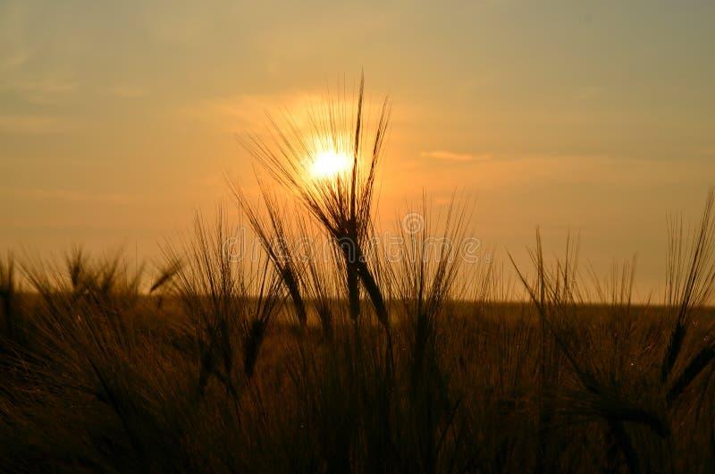 Download Puesta del sol foto de archivo. Imagen de nubes, colorido - 64200952