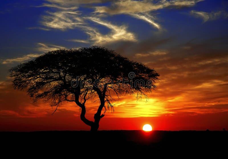 Puesta del sol africana foto de archivo