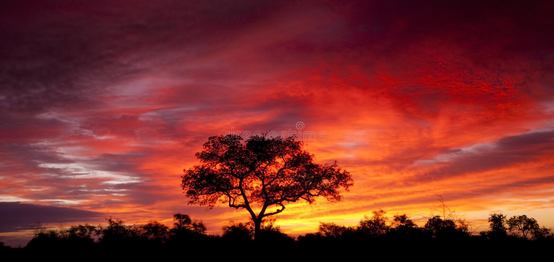 Puesta del sol africana fotografía de archivo libre de regalías
