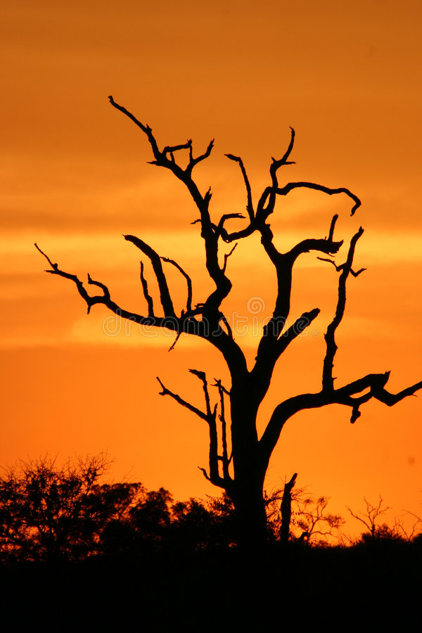 Puesta del sol africana 3 imágenes de archivo libres de regalías