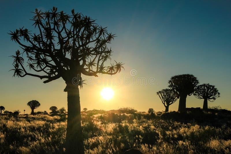 Puesta del sol africana hermosa con los árboles silueteados del estremecimiento y la hierba iluminada imagen de archivo