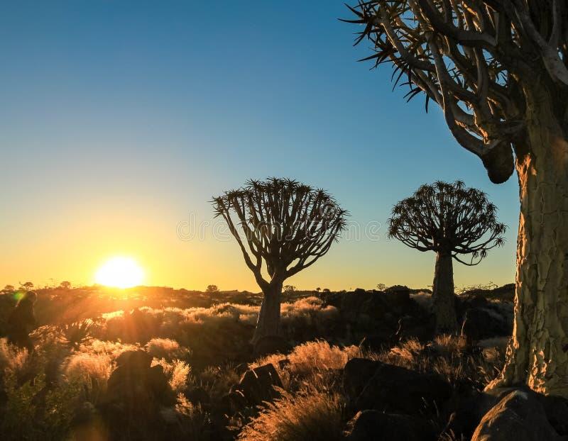 Puesta del sol africana hermosa con los árboles silueteados del estremecimiento y la hierba iluminada foto de archivo