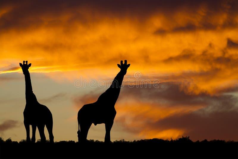 Puesta del sol africana idílica foto de archivo libre de regalías