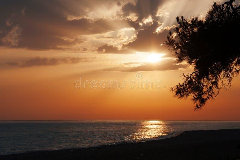 Puesta del sol agradable con el mar y el pino foto de archivo libre de regalías