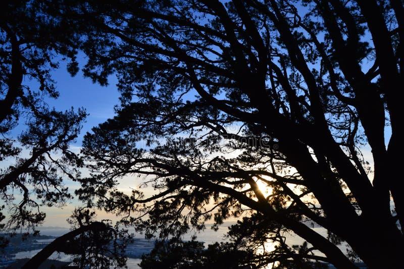 Puesta del sol agradable con las siluetas de ramas imagen de archivo