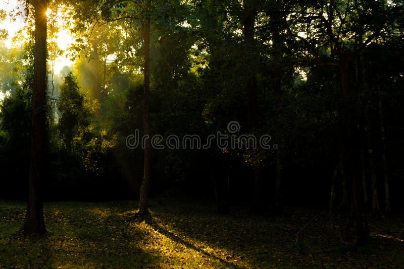 Puesta del sol ahumada de oro en el bosque de Angkor imagen de archivo