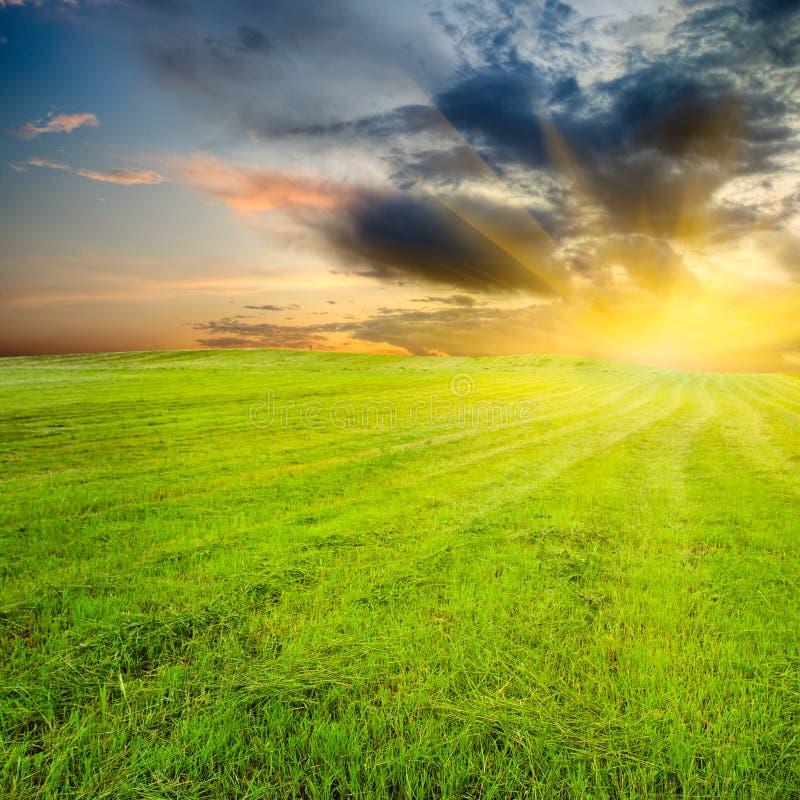 Puesta del sol amarilla en el campo verde foto de archivo