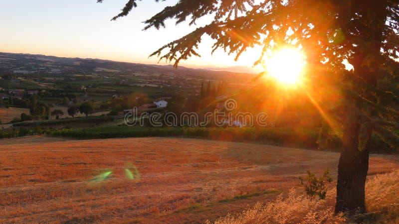 Puesta del sol amarilla del país detrás de un árbol foto de archivo