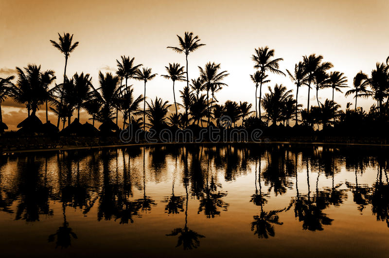 Puesta del sol amarilla romántica en una playa por completo de palmeras altas imagenes de archivo
