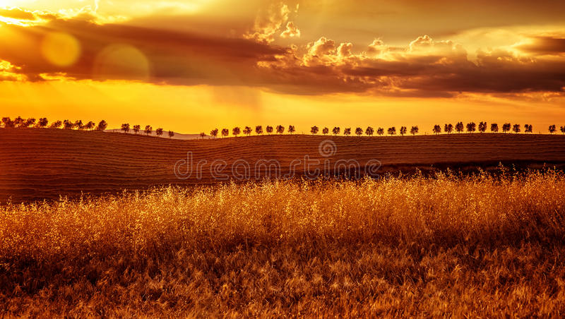 Puesta del sol amarilla sobre tierras de labrantío fotos de archivo