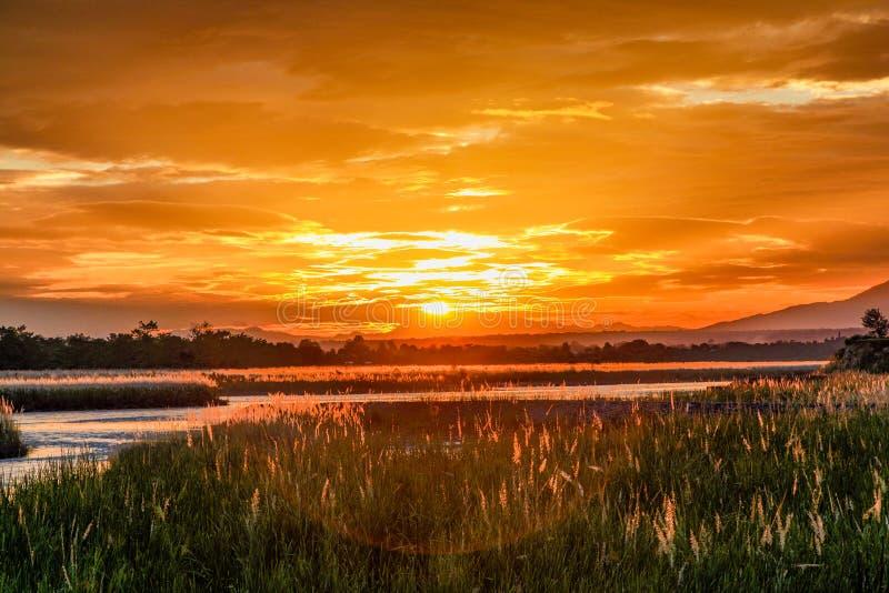 Puesta del sol anaranjada con la llamarada de la lente, la hierba alta gruesa y un río perezoso plano fotos de archivo