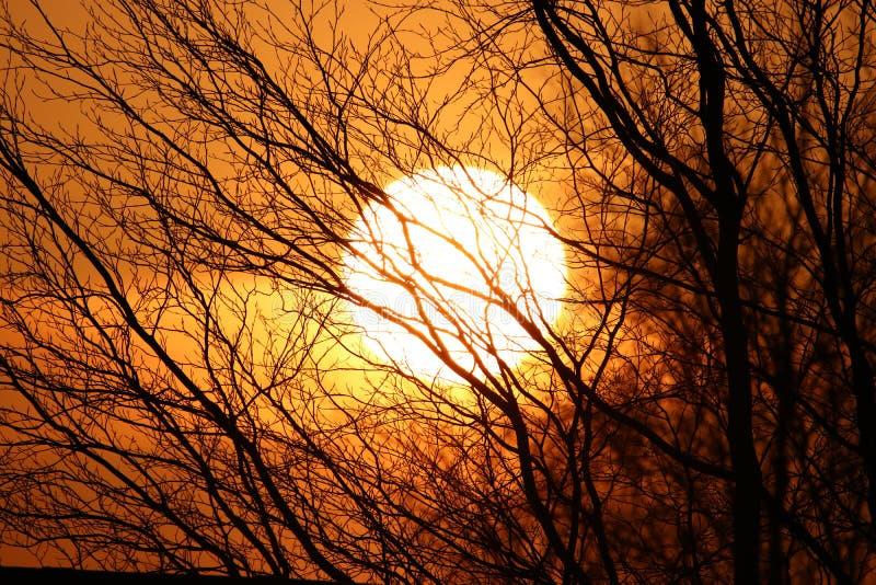 Puesta del sol anaranjada detrás de árboles oscuros foto de archivo libre de regalías