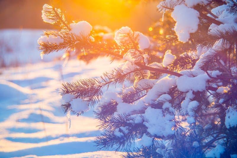 Puesta del sol anaranjada en invierno fotos de archivo libres de regalías