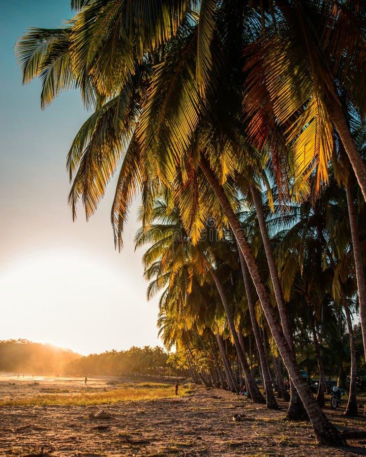 Puesta del sol anaranjada en una playa con las palmeras fotos de archivo libres de regalías