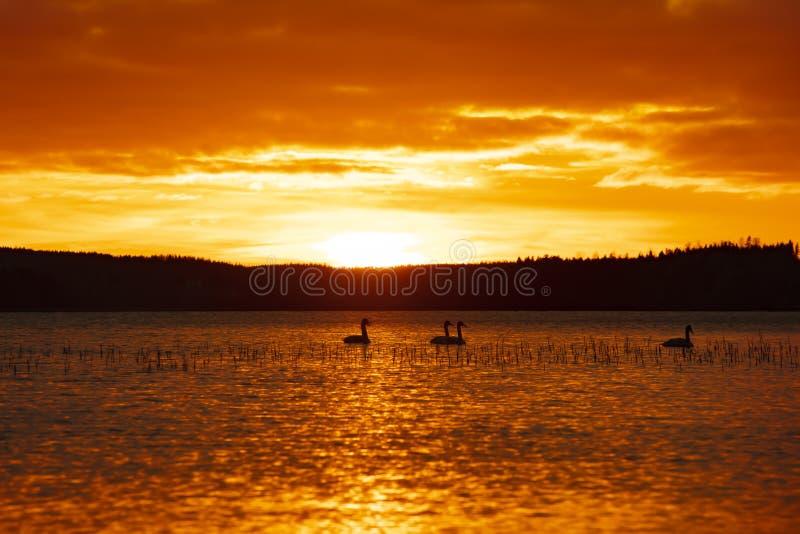 Puesta del sol anaranjada y amarilla hermosa en Finlandia foto de archivo libre de regalías