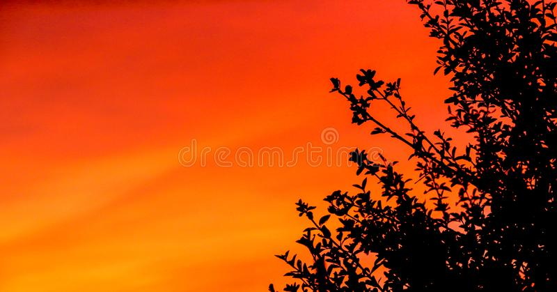 Puesta del sol anaranjada y roja en el Brasil con una silueta de un árbol en el fondo imagenes de archivo